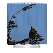 Red Tailed Hawk 2 Shower Curtain by Ernie Echols