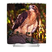 Red Tailed Hawk - 53 Shower Curtain