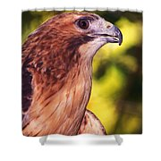 Red Tailed Hawk - 59 Shower Curtain