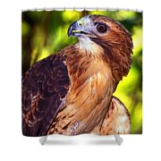 Red Tailed Hawk - 66 Shower Curtain