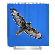 Red-tailed Hawk Arizona Shower Curtain