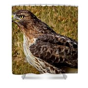 Red Tailed Hawk Close Up Shower Curtain