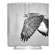 Red Tailed Hawk II Shower Curtain