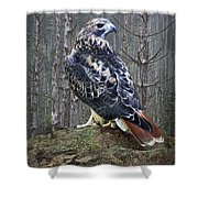 Red Tailed Hawk Perched On A Rock Shower Curtain