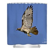 Red-tailed Hawk Takeoff Shower Curtain