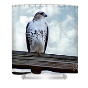 Red Tailed Hawk Waiting Shower Curtain