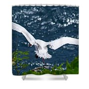 Red Tailed Tropic Bird Shower Curtain