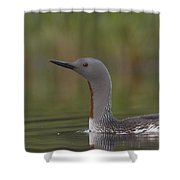 Red-throated Loon In Breeding Plumage Shower Curtain