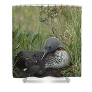 Red-throated Loon With Chick On Nest Shower Curtain