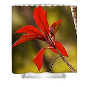 Red Ti Leaves Shower Curtain