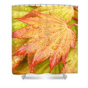 Red Tip Leaf Shower Curtain