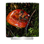 Red Toadstool Shower Curtain