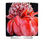 Red Torch Ginger On Black Shower Curtain