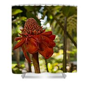 Red Torch Ginger Lily In Hawaii Shower Curtain