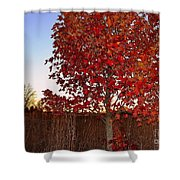 Red Tree At Sunset Shower Curtain