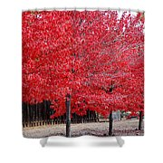 Red Tree Line Shower Curtain