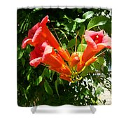 Red Trumpet Shower Curtain