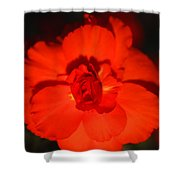 Red Tuberous Begonia Shower Curtain