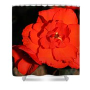 Red Tuberous Begonia Flower Shower Curtain