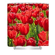 Red Tuilip Bed Shower Curtain