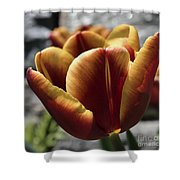 Red Tulip  2116 Shower Curtain