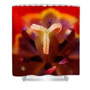 Red Tulip Abstract Shower Curtain