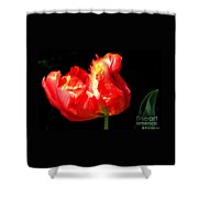 Red Tulip Blurred Shower Curtain