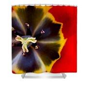Red Tulip Macro Shower Curtain