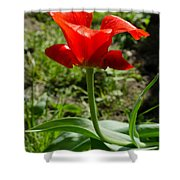 Red Tulip On The Green Background Shower Curtain