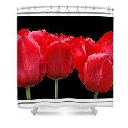 Red Tulip Triptych Shower Curtain