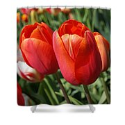 Red Tulips Flowers Pink Orange Tulip Flowers Shower Curtain