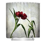 Red Tulips On A Letter Shower Curtain