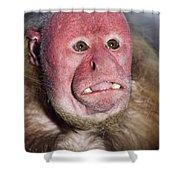 Red Uakari Shower Curtain