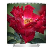 Red Velvet 1a Shower Curtain