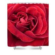 Red Velvety Rose Shower Curtain