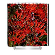 Red Devils Tongue Vine Vertical Shower Curtain