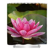 Red Water Lily 4 Shower Curtain