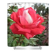 Red-white Rose Shower Curtain