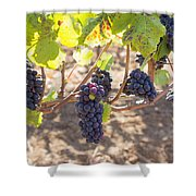 Red Wine Grapes Hanging On Grapevines Shower Curtain