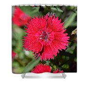 Red Winery Flower Shower Curtain