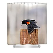 Red Wing Black Bird On Post Shower Curtain