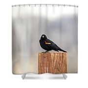 Red Wing Black Bird On Post IIi Shower Curtain