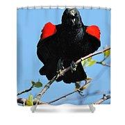 Red Wing Blackbird 1 Shower Curtain