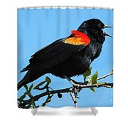 Red Wing Blackbird 2 Shower Curtain
