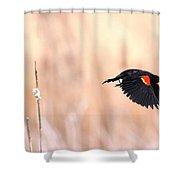 Red-wing Blackbird In Flight Shower Curtain