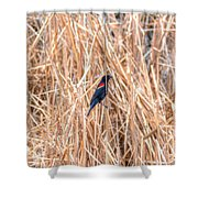 Red Wing Blackbird  Shower Curtain