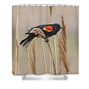 Red-wing Blackbird Shower Curtain