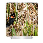 Red-wing Hiding Shower Curtain