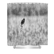 Red-wing Singing In The Marsh Shower Curtain