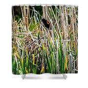 Red-winged Black Bird In The Cattails Shower Curtain